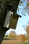 nesting-box-557998_1920