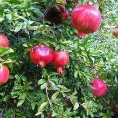 Entretien de vos fruitiers