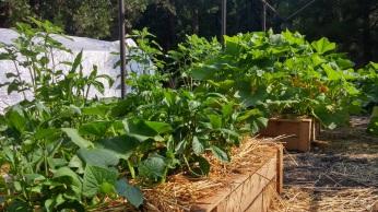garden-1387011