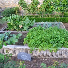 vegetable-garden-890625_1920