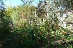 T&H_agroécologie_20170921_110